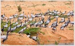 Rajasthan bird watching Tours