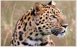 Wildlife tour packages in Rajasthan